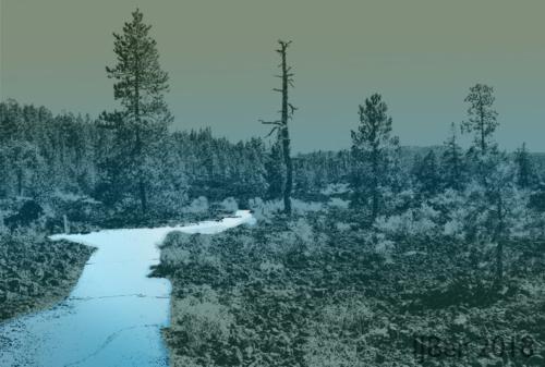 wet woods